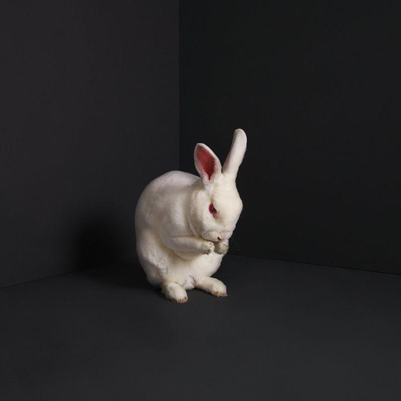 brume-rabbits