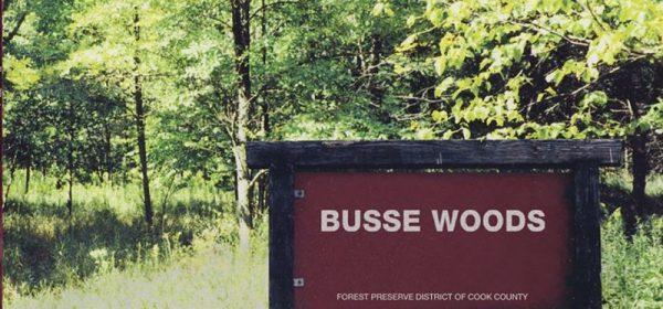 acid-king-busse-woods